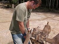 Deer land  Western Malaysia