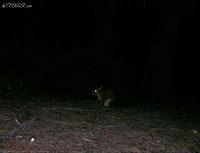 Freycinet National Park   Tasmania